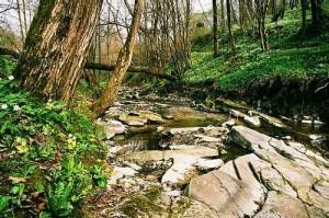 potok w Puławach - blisko domu