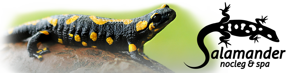 Salamander Nocleg&Spa Logo
